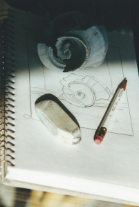 Drawing a Shell